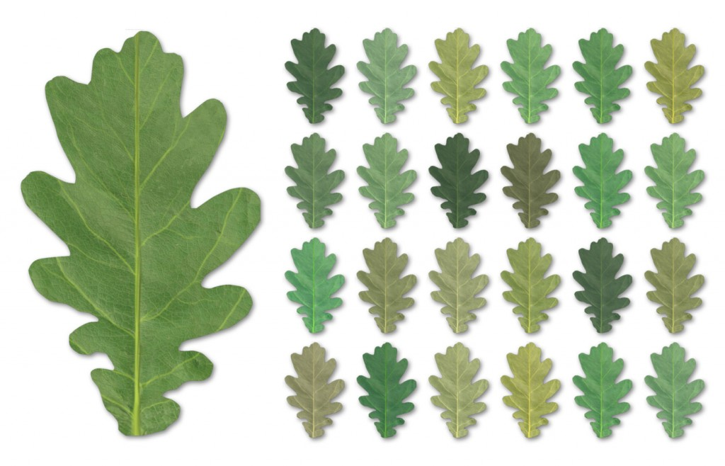 VP_Crossmap_Leaf_ColorVariations