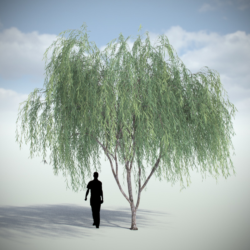 Weeping Willow - Variation 1