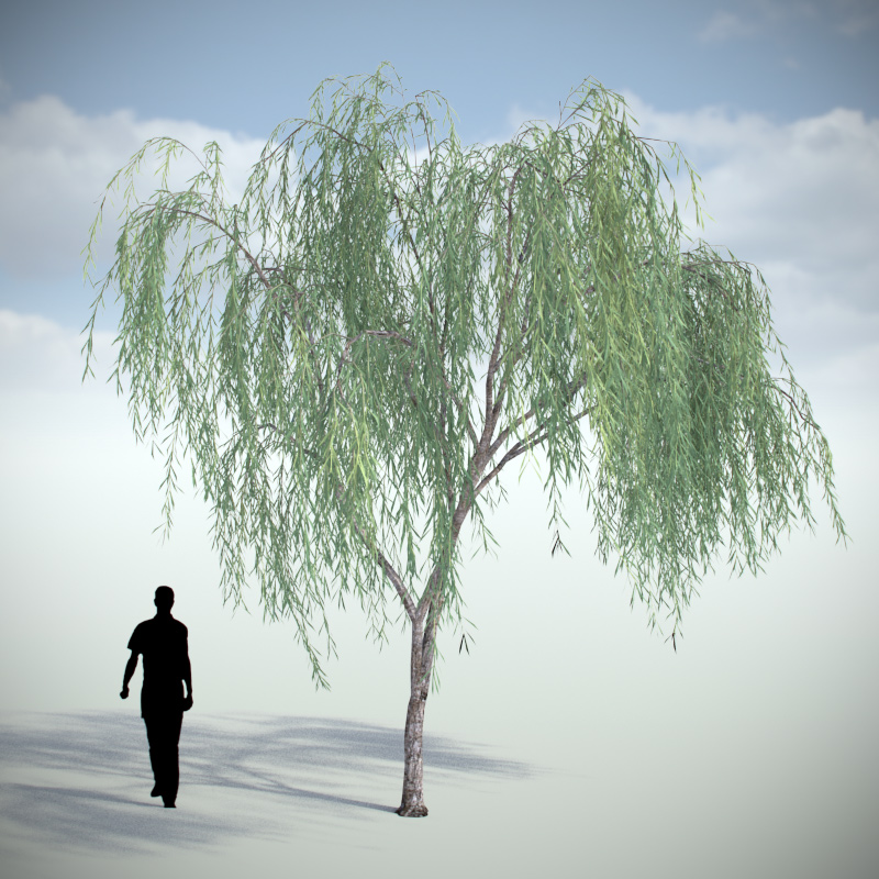 Weeping Willow - Variation 2