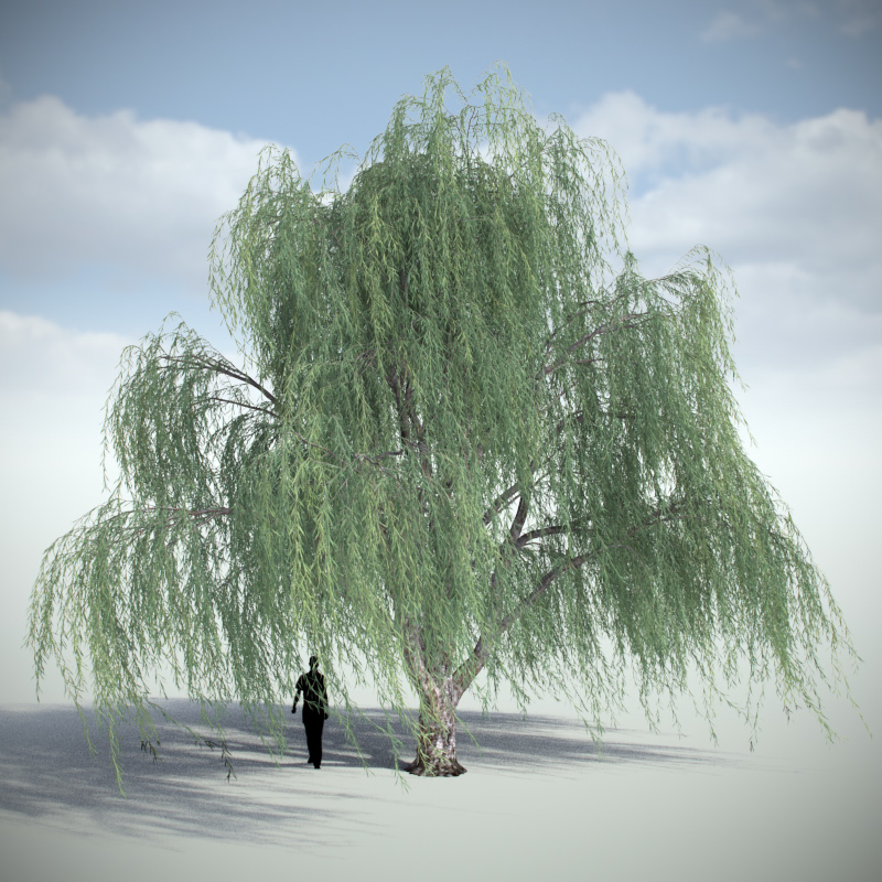 Weeping Willow - Variation 3