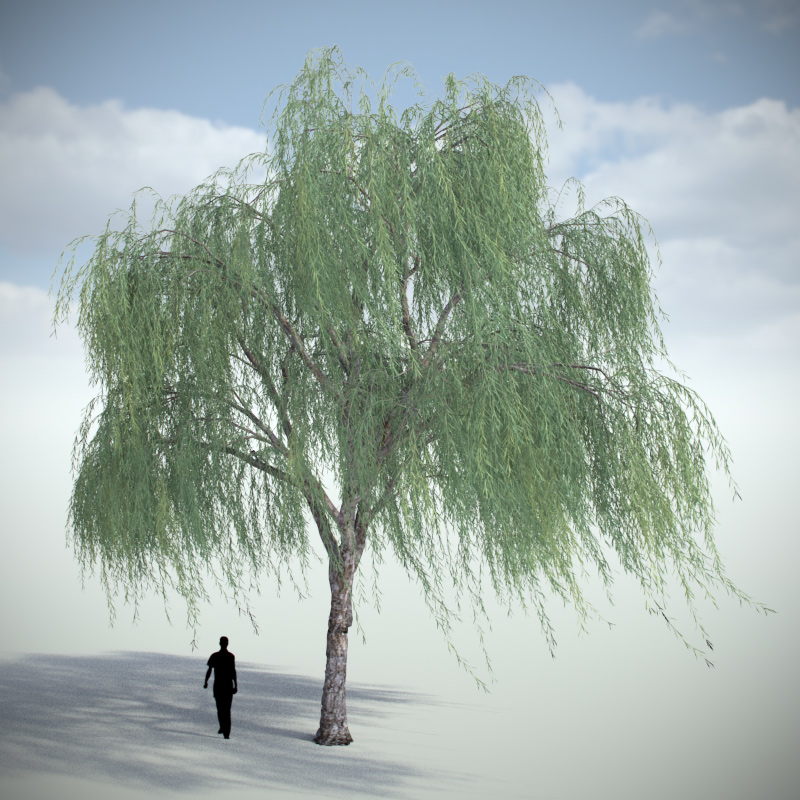 Weeping Willow - Variation 4