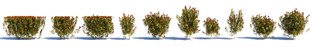 3D shrubs Photinia Fraseri